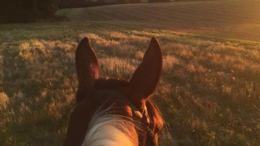 Horse riding in essex
